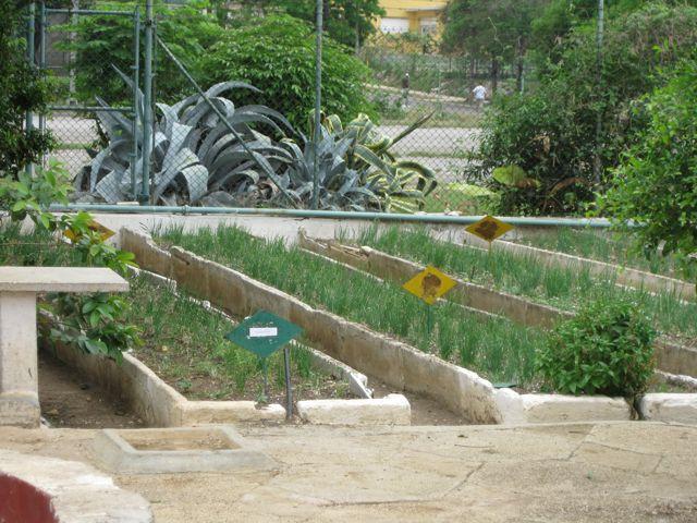 Marti gardens